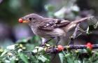 Как птицы распространяют семена растений