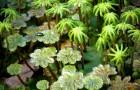 Как выглядели растения раньше