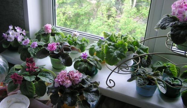 Календарь ухода за комнатными растениями