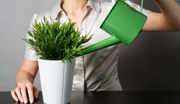 Микроклиматические условия выращивания комнатных растений