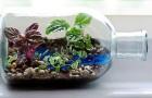 Мини-оранжерея в аквариуме, бутылке
