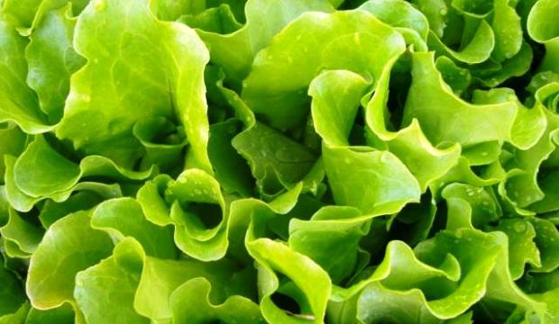 Найден способ продлить жизнь салата