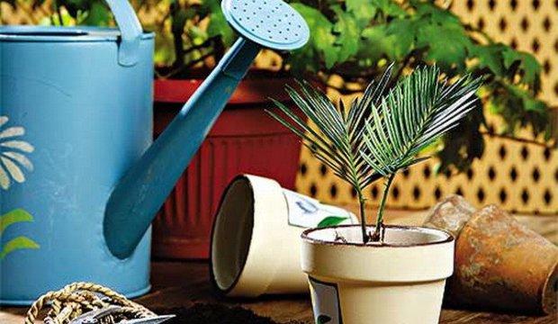 Обмывание растений