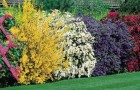 Обрезка кустовых культур