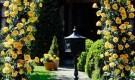 Обрезка плетистых роз