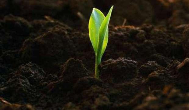 Почва, плодородие и урожай
