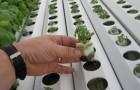 Потребность растений в питательных элементах и их источники