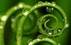 Потребность растений в воде: как ее удовлетворить