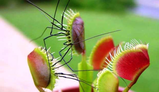 Растения тоже могут быть зомби