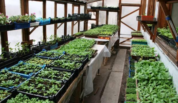 Секреты выращивания овощной рассады в теплице