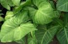 Сезоны года и жизнь растений