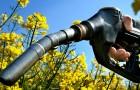 Так ли уж полезно для климата производство биотоплива