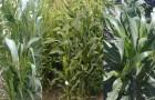Тайна-медленного-окультуривания-растений