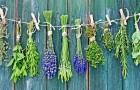 Рост спроса на лекарственные травы