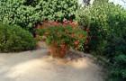 Ботанический сад Кап Роиг