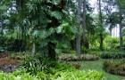 Ботанический сад Ланкестер