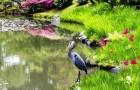 Ботанический сад Мириам К. Шмидт
