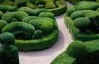 Формирование необычных топиарных форм