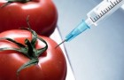 ГМО спровоцировало эпидемию самоубийств