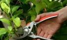Инструменты и оборудование для обрезки деревьев