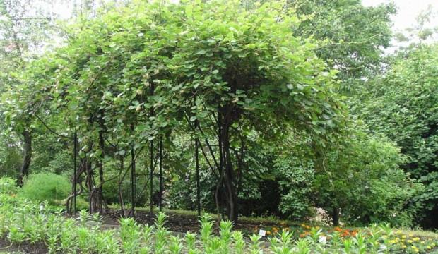 Использование опоры для деревьев