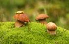 Как грибы помогают очистить загрязнённую почву