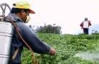 Как снизить уровень пестицидов в организме