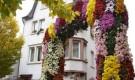 Каскад из хризантем
