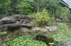 Королевские ботанические сады Сиднея