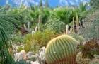 Национальный ботанический сад Кирстенбоша