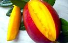 Обрезка манго