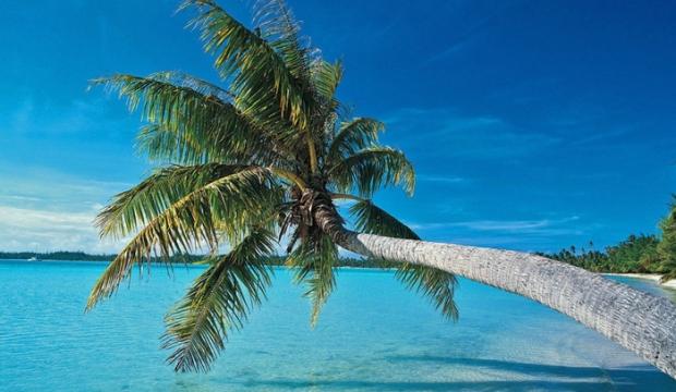 Обрезка пальм и схожих с ними растений