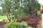 Обрезка вечнозеленых деревьев