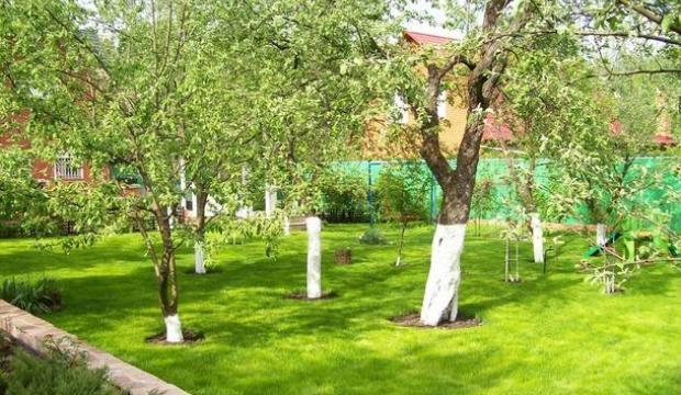 Дизайн плодового сада своими руками - Planetarium71.ru