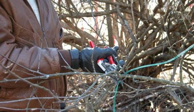 Основные методы обрезки плодовых деревьев