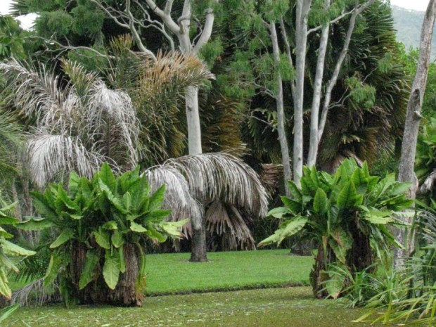 Пальмовый лес Таунсвилля