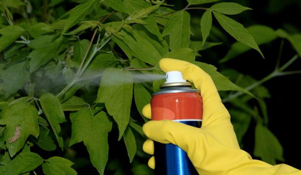 Пестициды в овощах и фруктах с грядки