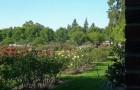 Питомник и сады Сент-Роуз