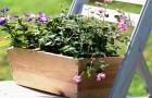 Пять причин выращивать растения в контейнерах