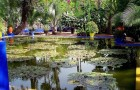 Сад Мажорелля