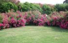 Сад розовых кустов