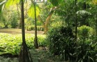 Сады спящего гиганта