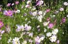 Секреты образования цветов