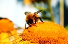 Удивительные ароматы, составляемые пчелами