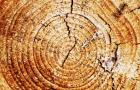 Влияние интенсивности света на плотность годичных колец