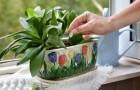 11 октября: удобряем растения