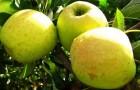 12 сентября 2014 года: снимаем плоды