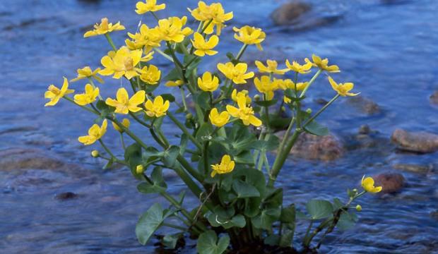 16 октября 2014 года: хранение водных растений
