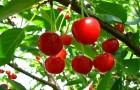 17 октября 2014 года: снимаем плоды