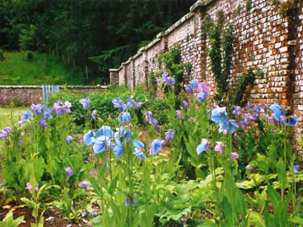 Сады Келли